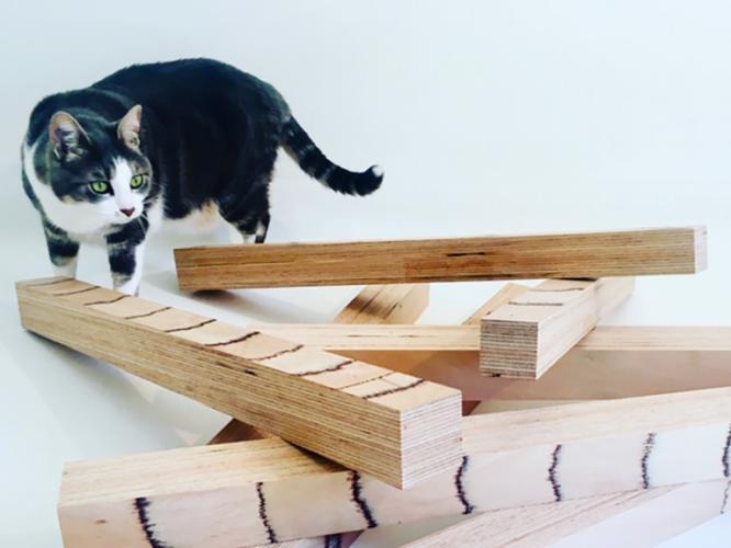 Simone - Le chat à l'origine d'UCDLT entourée de bois de hêtre baubuche de 60